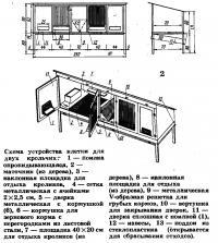 Схема устройства клетки для двух крольчих