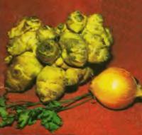 Так выглядит клубень топинамбура рядом с обычными овощами
