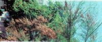 Декоративные растения для засоленой почвы