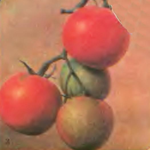 Томаты сорта Виноградный