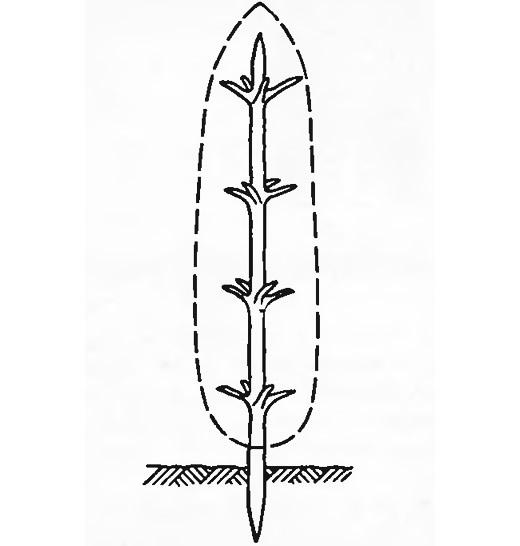 Устройство копны из старой елки