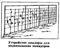 Устройство шпалеры для подвязывания помидоров