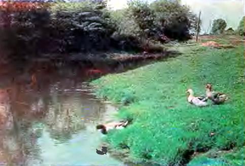 Утки на берегу водоема