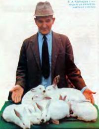 В. А. Карташев с молодняком калифорнийской породы