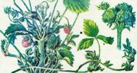 Защита плодовых деревьев и ягодных растений